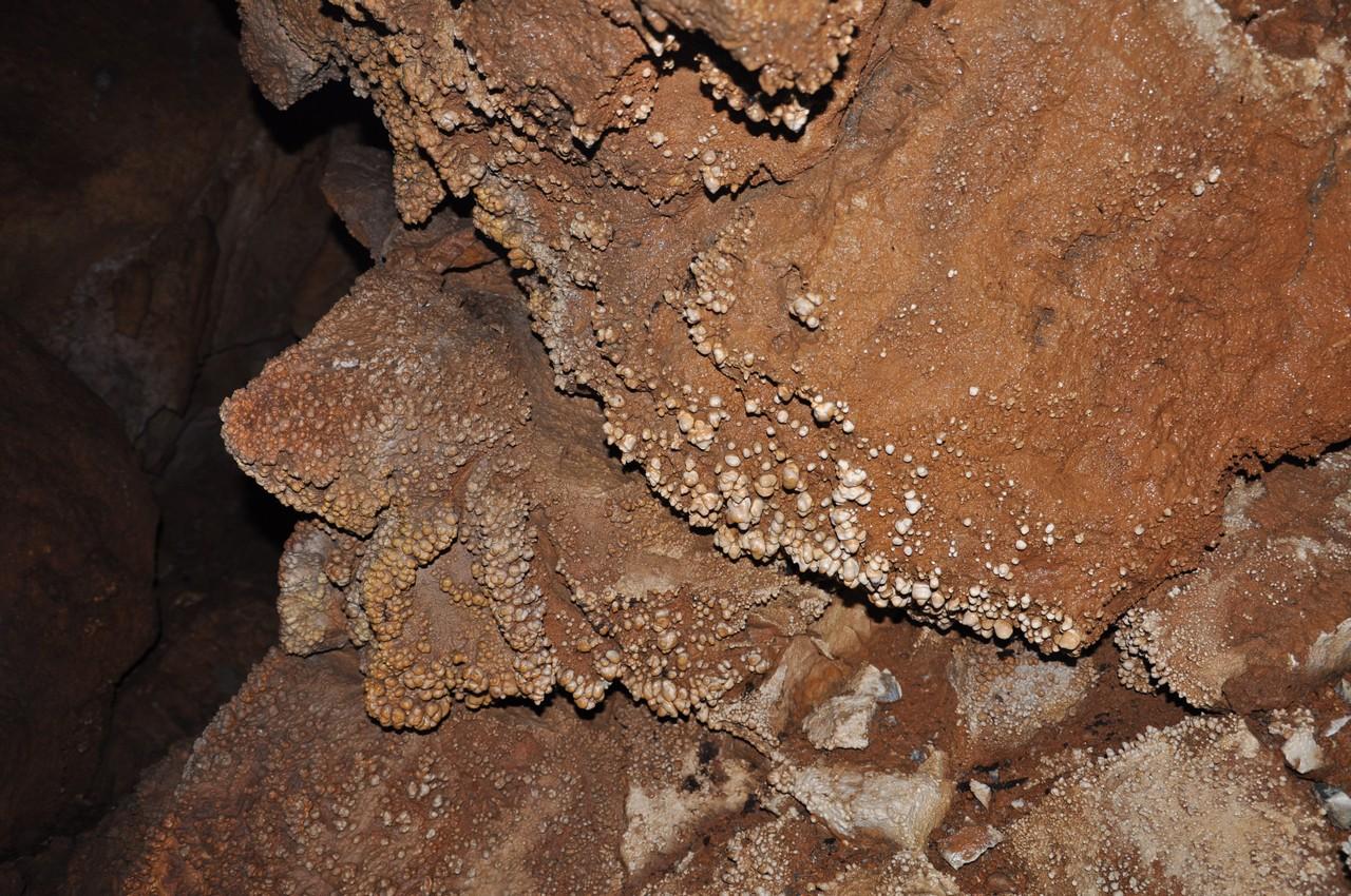 Коралиты